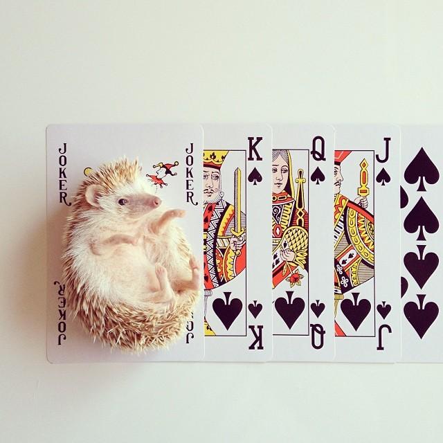 darcytheflyinghedgehog6