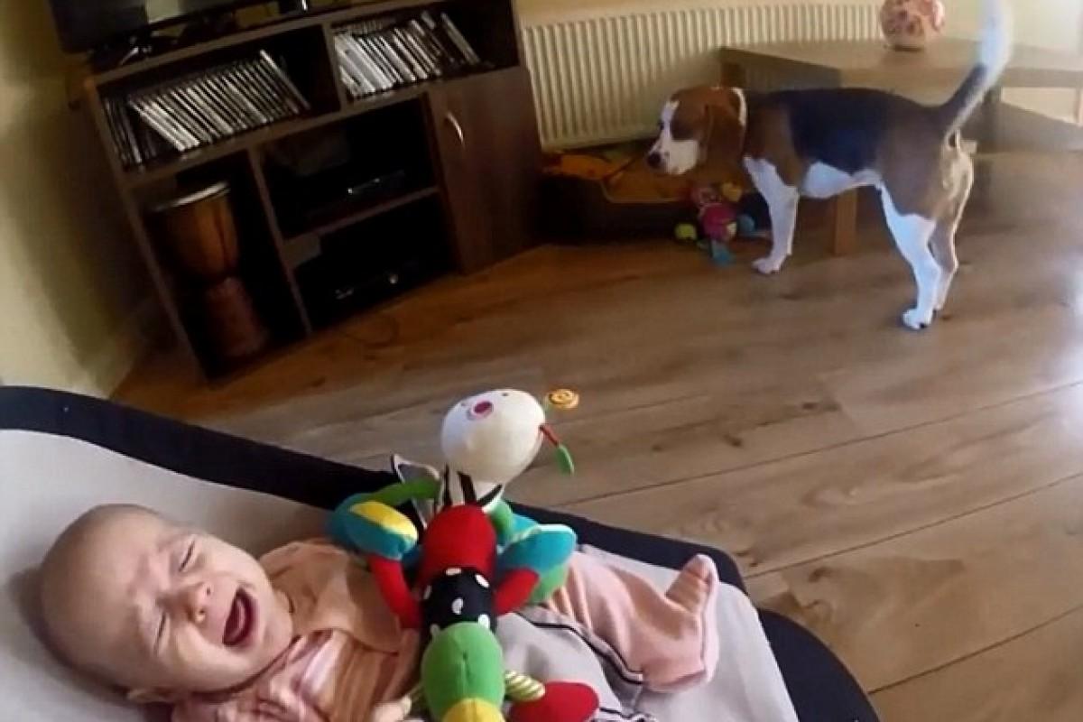 [Βίντεο] Συγγνώμη μωράκι, πάρε πίσω το παιχνίδι σου!