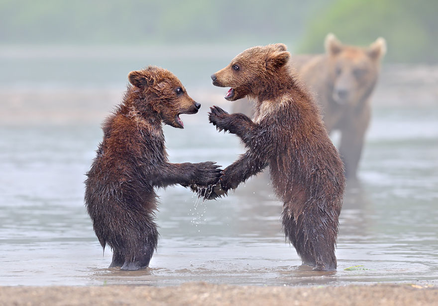 bear-photography-10