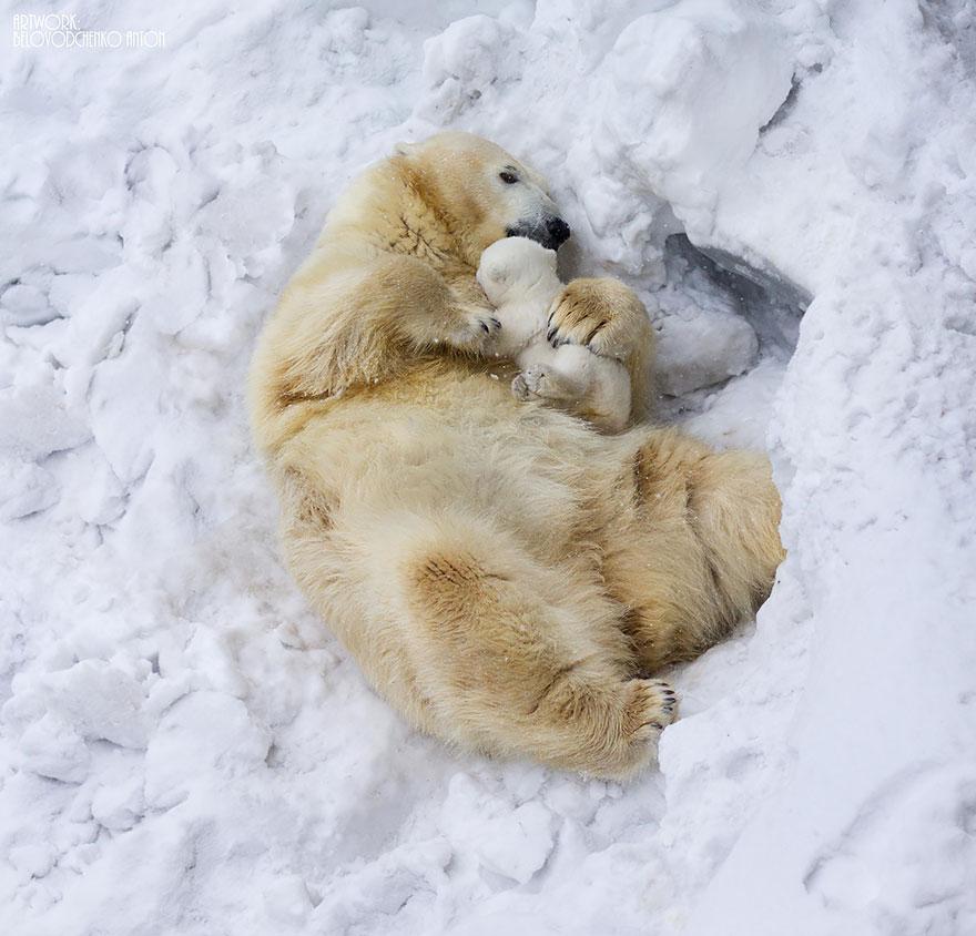bear-photography-15