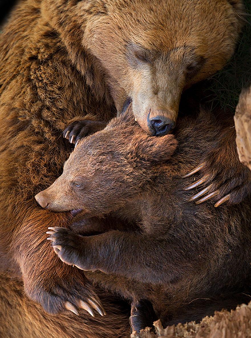 bear-photography-2012