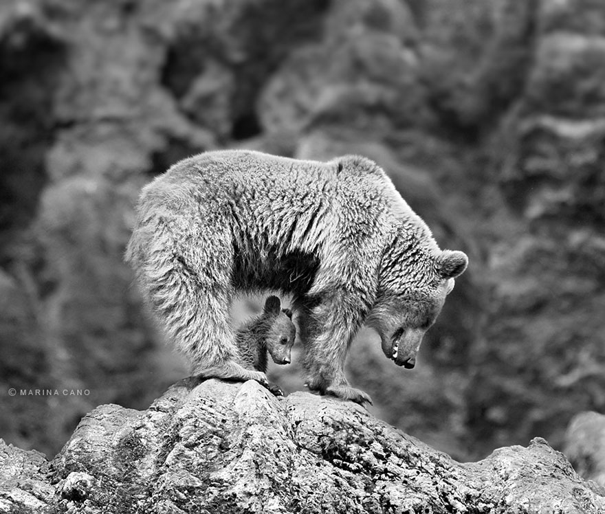bear-photography-203