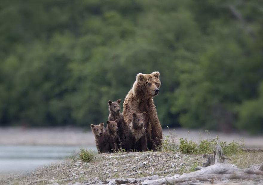 bear-photography-33