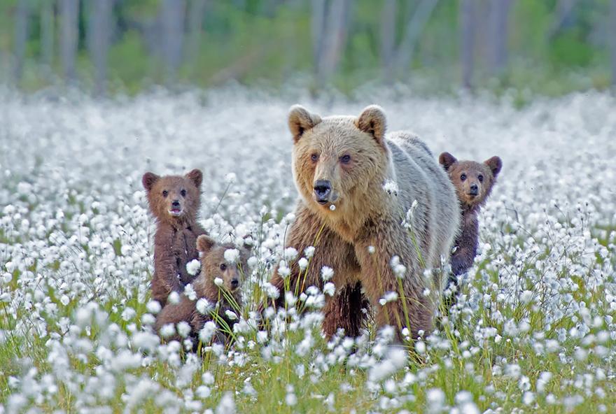bear-photography-35