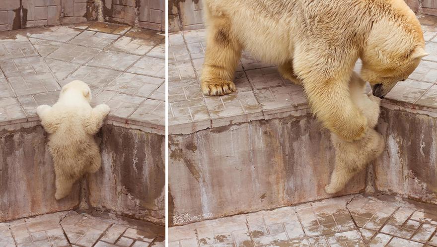 bear-photography-36