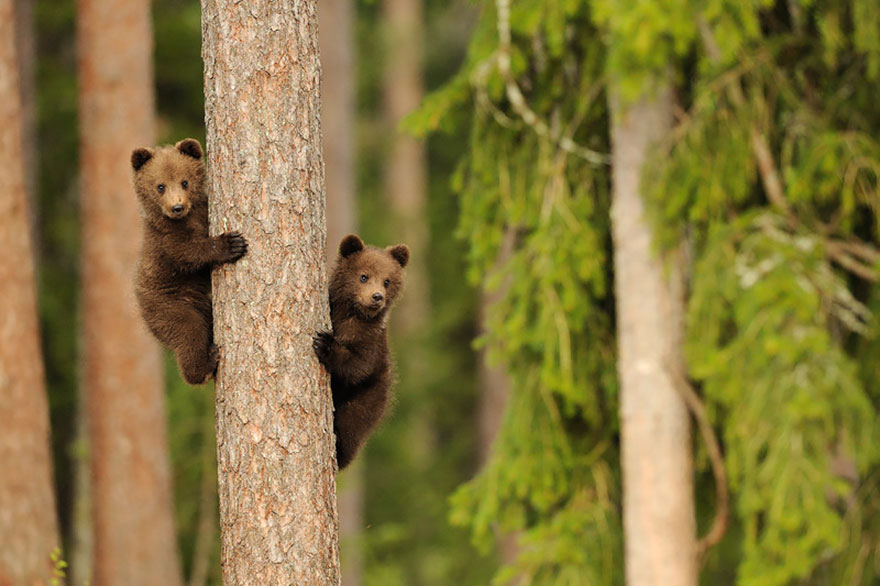 bear-photography-5