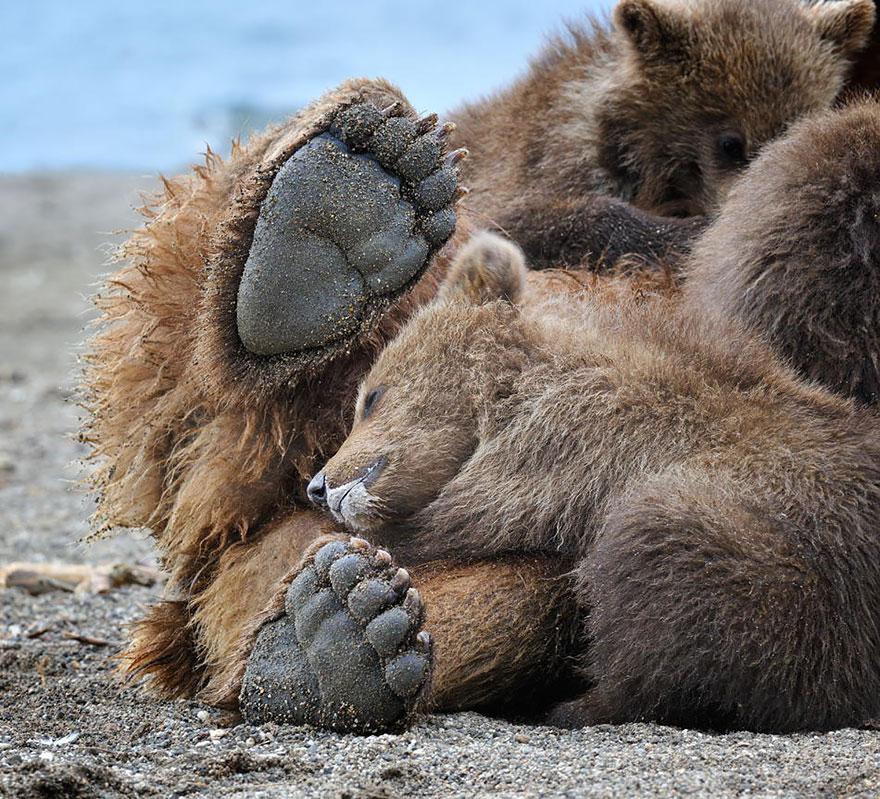 bear-photography-9