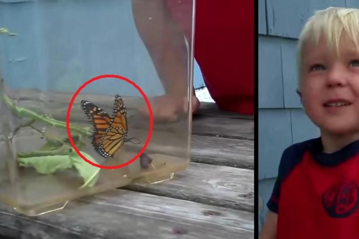 Αγοράκι έρχεται… αντιμέτωπο με μια πεταλούδα
