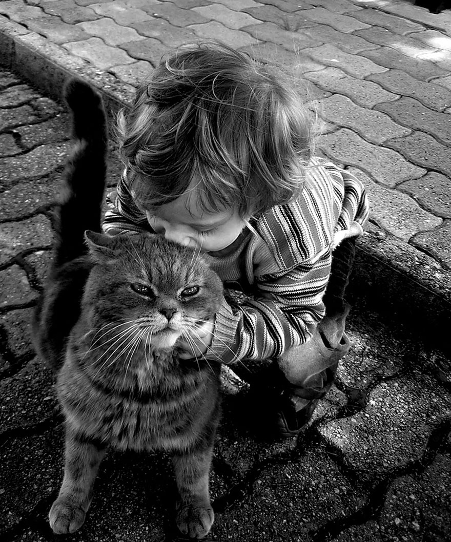 children-cat-playing-photography-303__880
