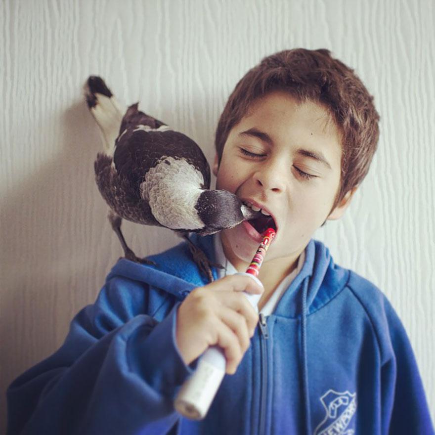 penguin-magpie-rescue-friendship-bloom-family-australia-14