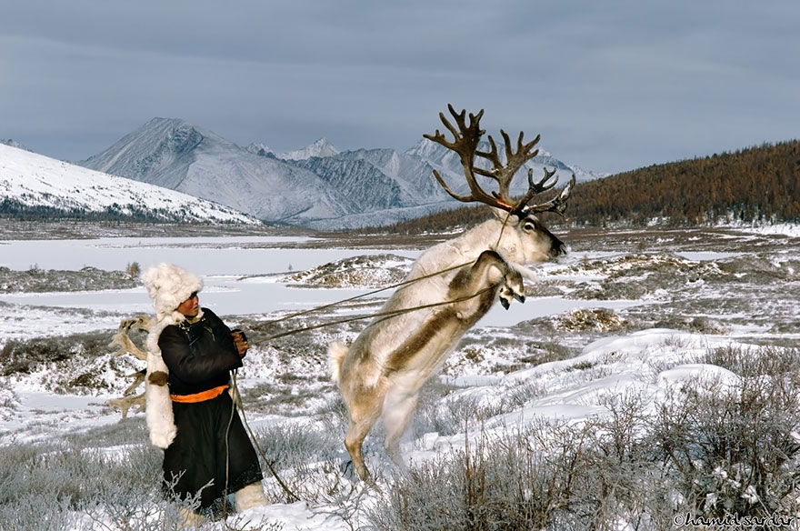 reindeer-people-hamid-sardar-afkhami-4