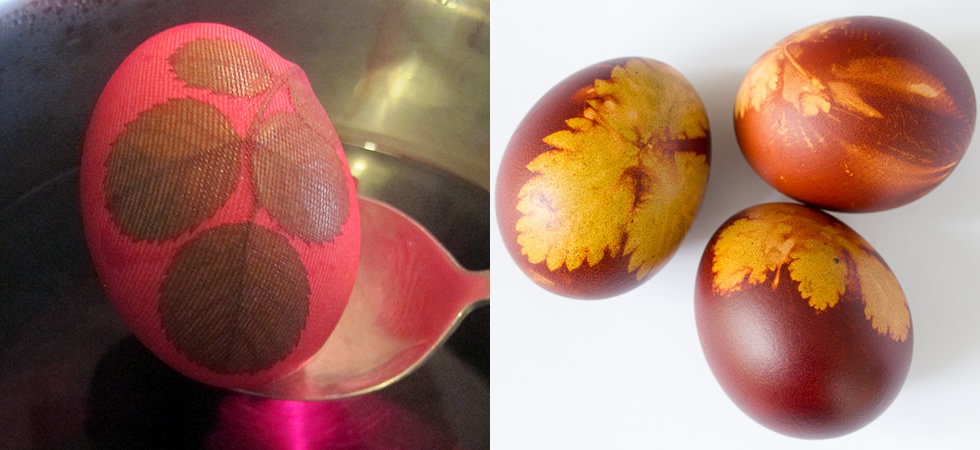 eggs_17