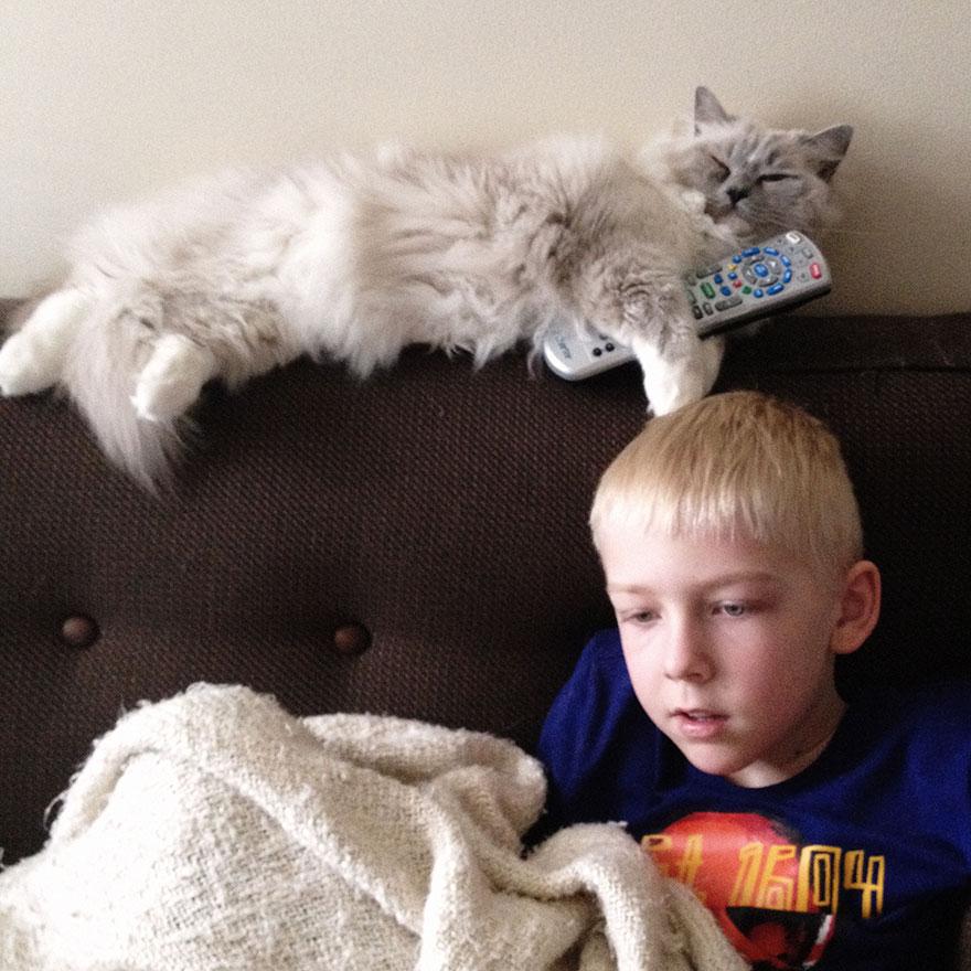 boy-cat-friendship-beth-mancuso11