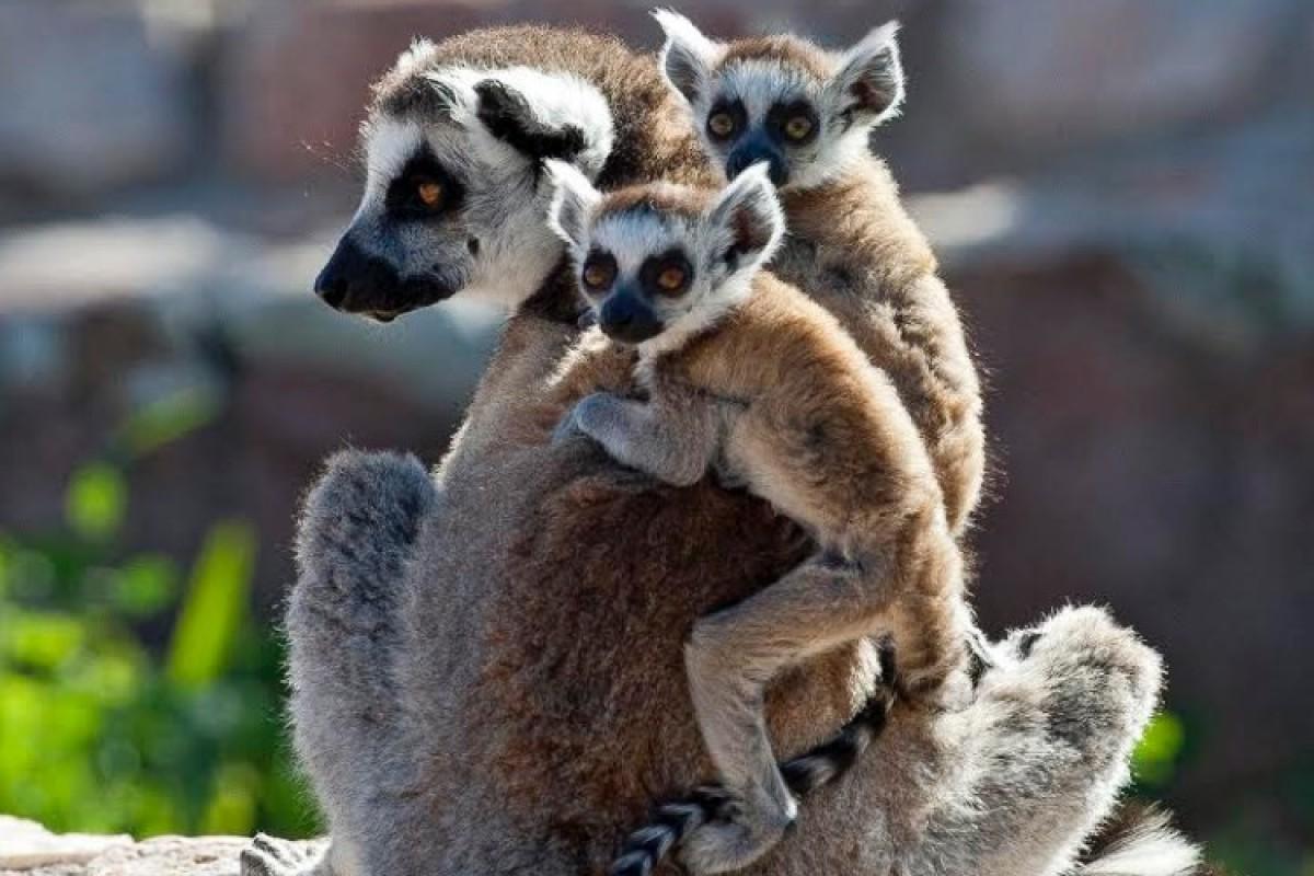 Δωρεάν εισιτήριο εισόδου για όλα τα παιδιά στο Αττικό Ζωολογικό Πάρκο μέχρι τις 31 Αυγούστου