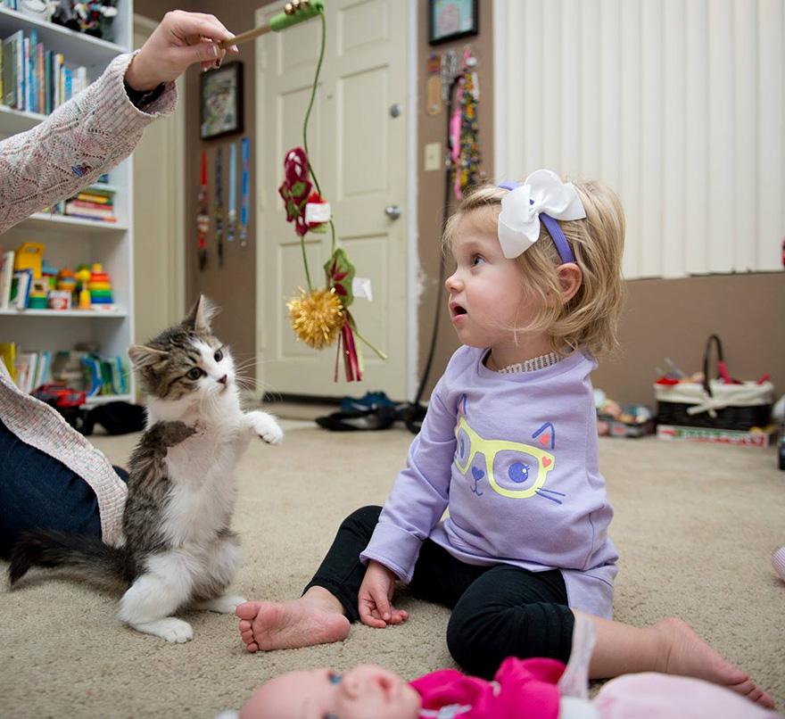 doc-three-legged-cat-amputee-girl-scarlette-62