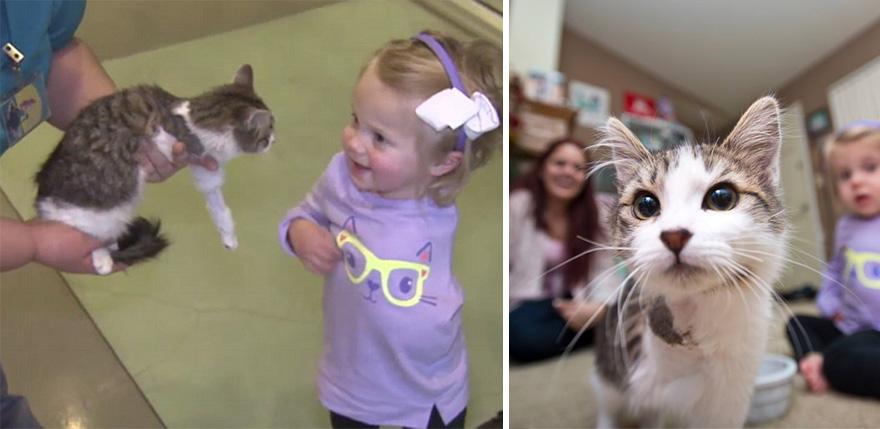 doc-three-legged-cat-amputee-girl-scarlette-741